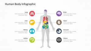 Human Body Infographic 1