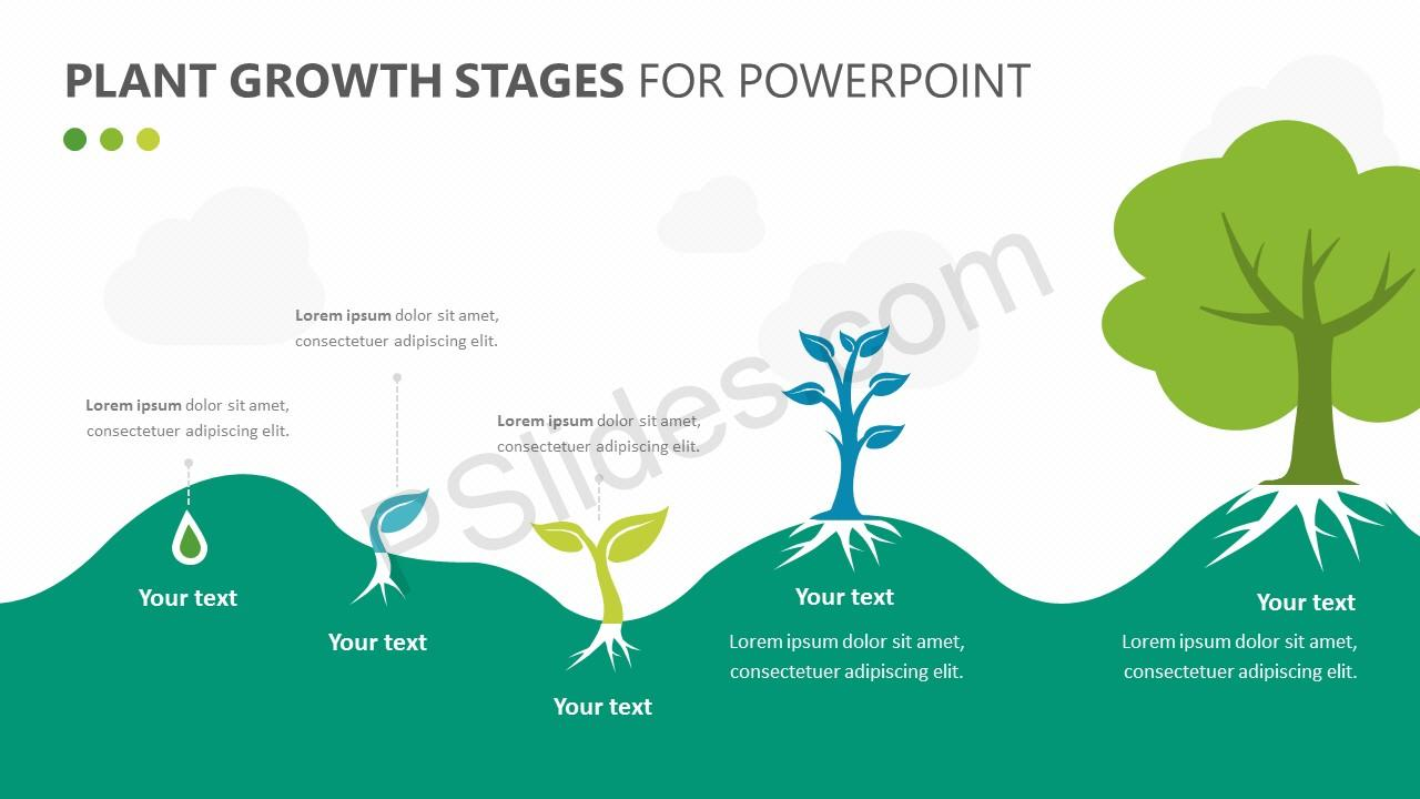 Plant Growth Stages Diagram for PowerPoint Slide 1