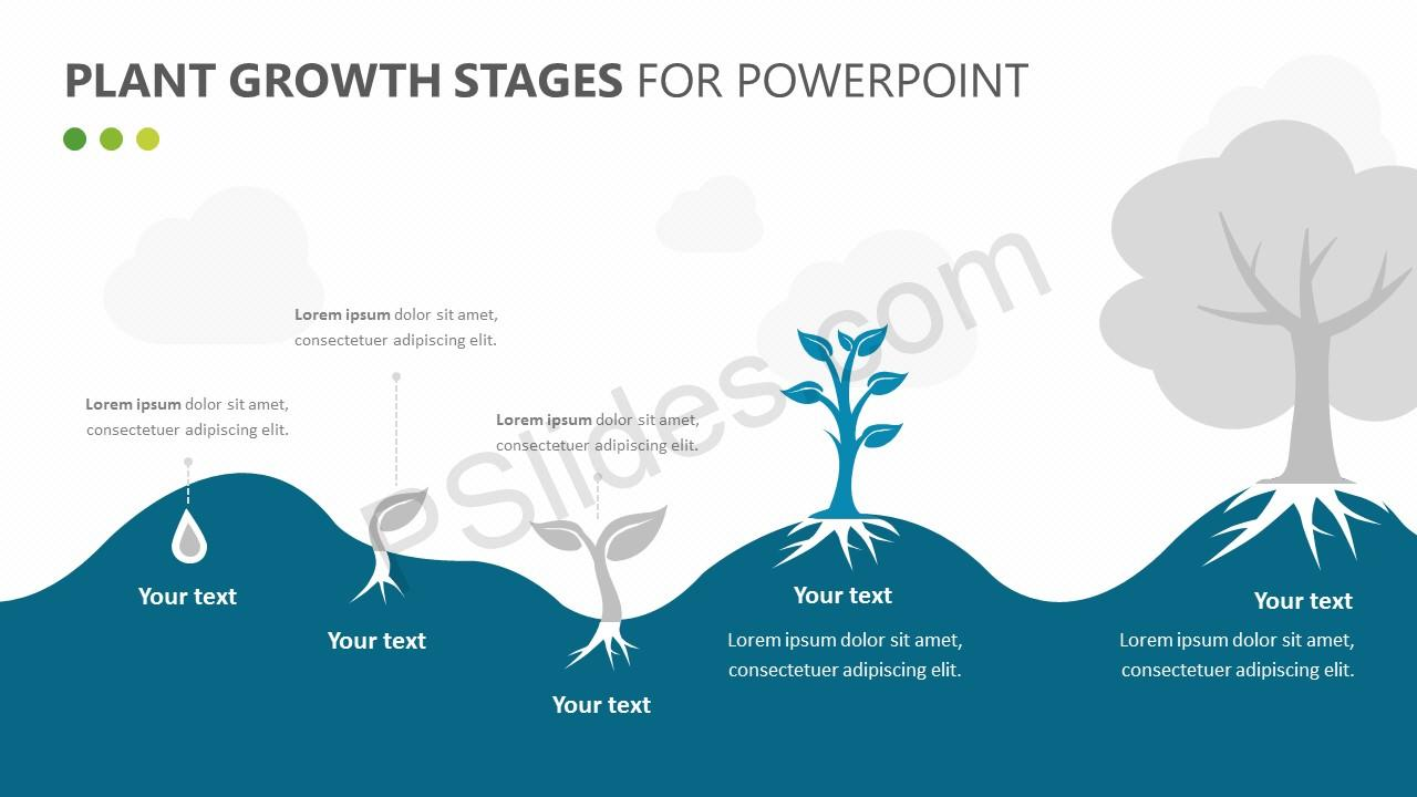 Plant Growth Stages Diagram for PowerPoint Slide 2