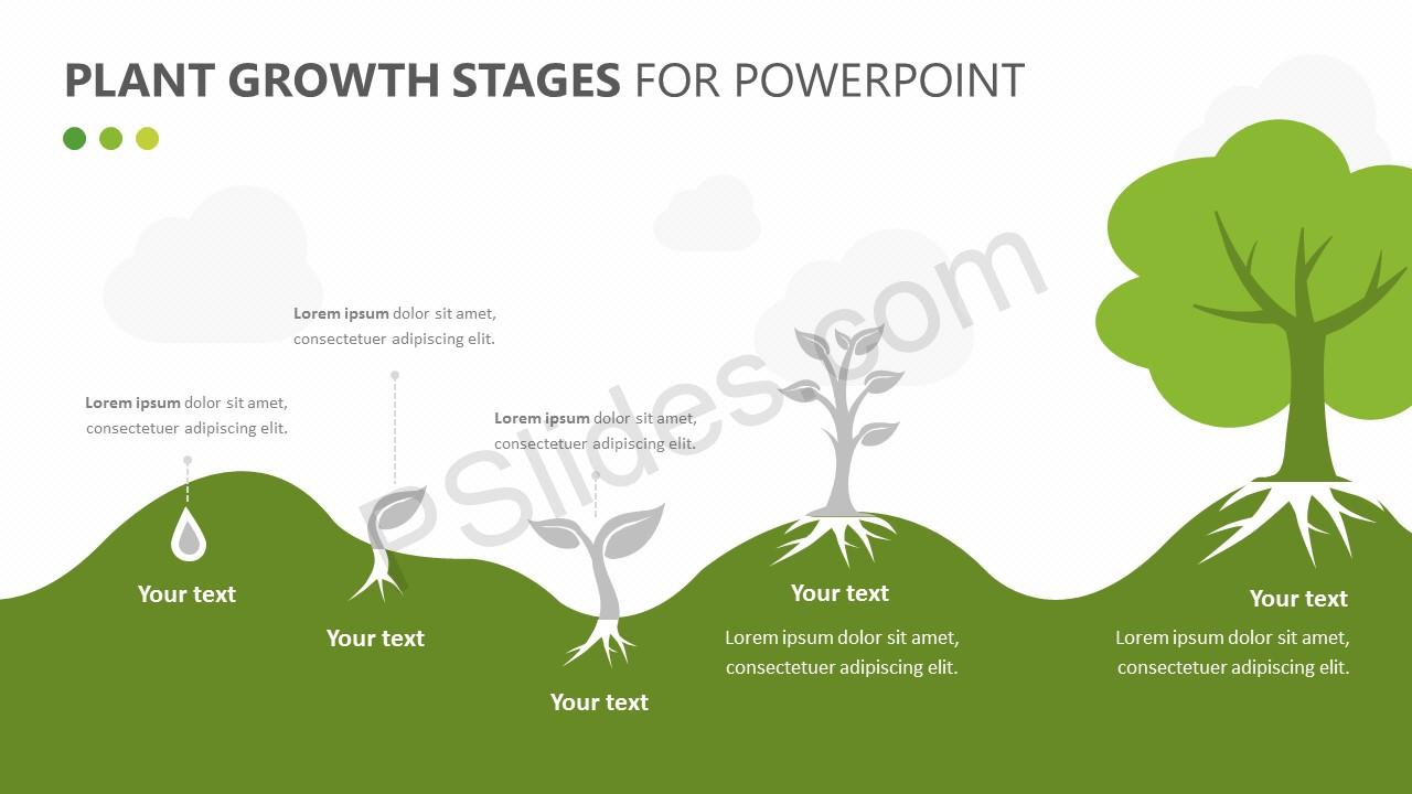 Plant Growth Stages Diagram for PowerPoint Slide 3