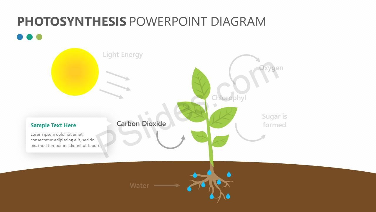Photosynthesis-PowerPoint-Diagram-Slide2