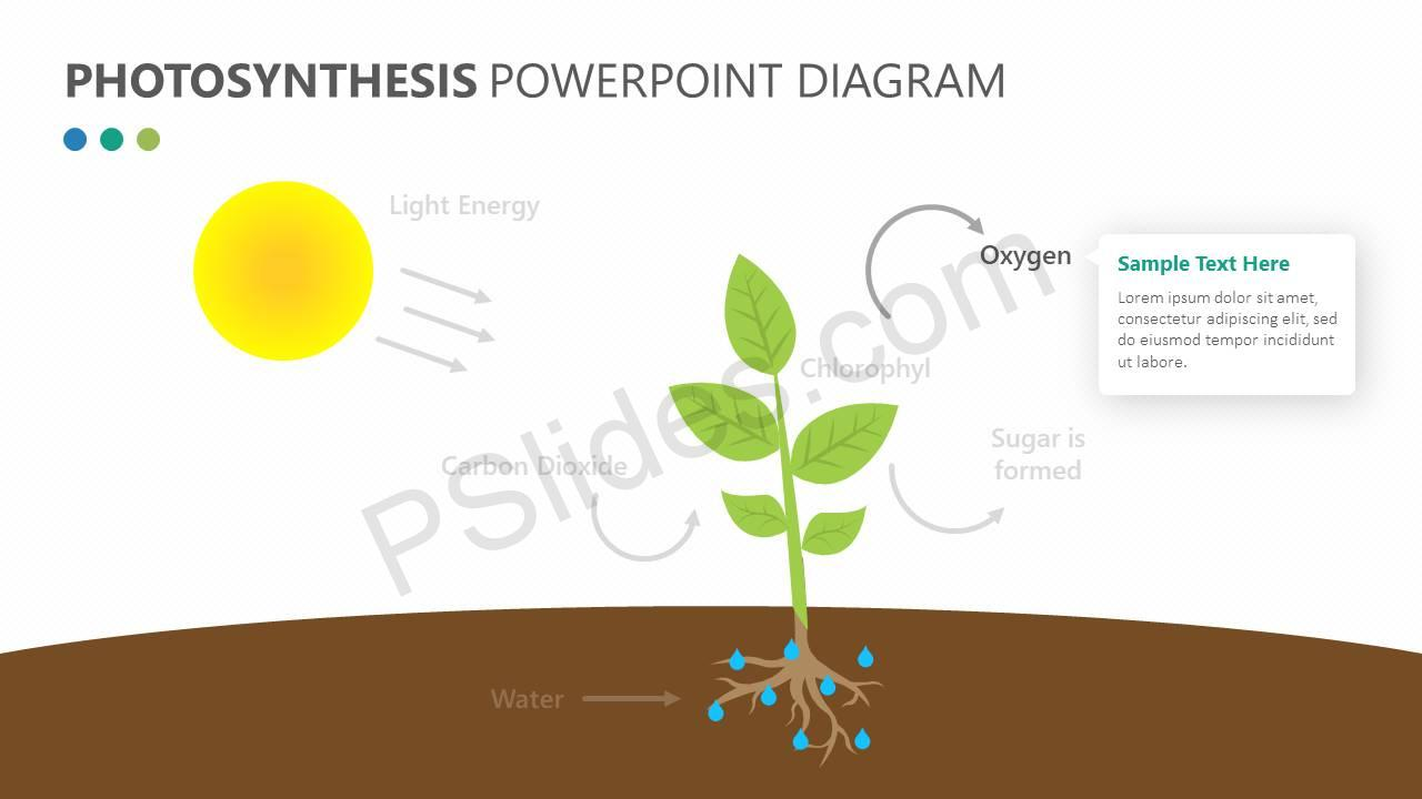 Photosynthesis-PowerPoint-Diagram-Slide3