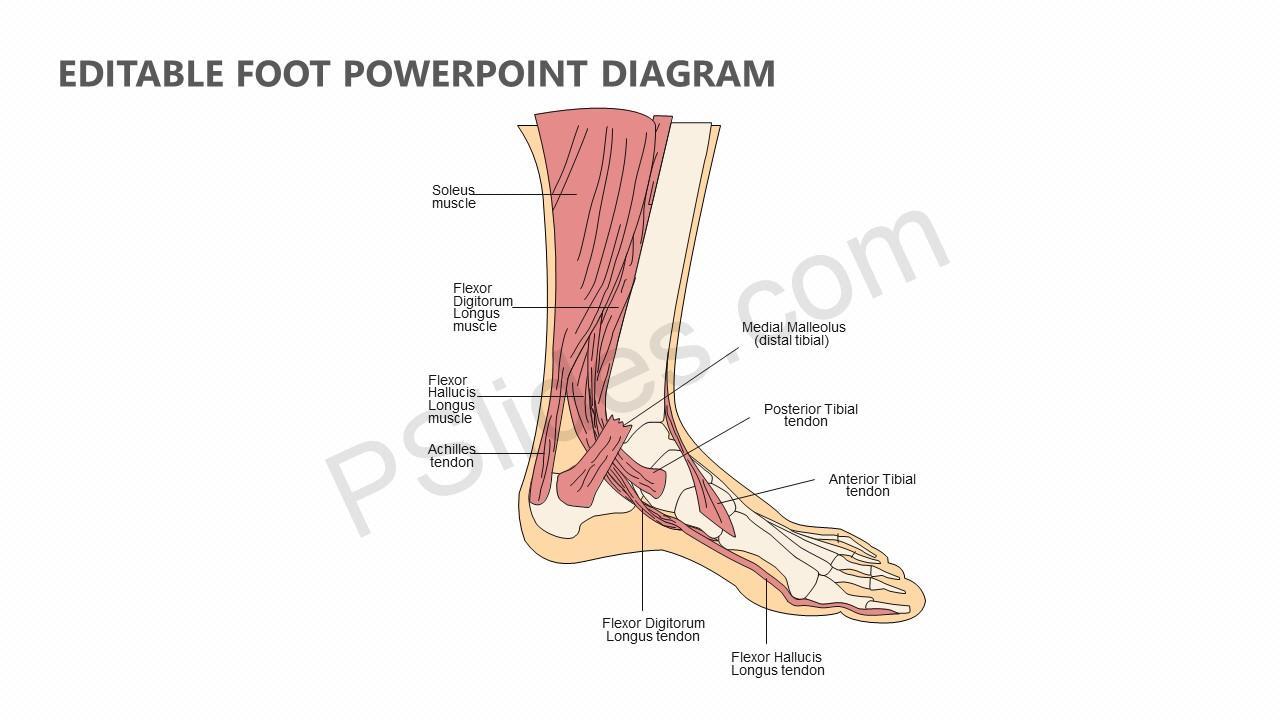 editable foot powerpoint diagram pslides. Black Bedroom Furniture Sets. Home Design Ideas
