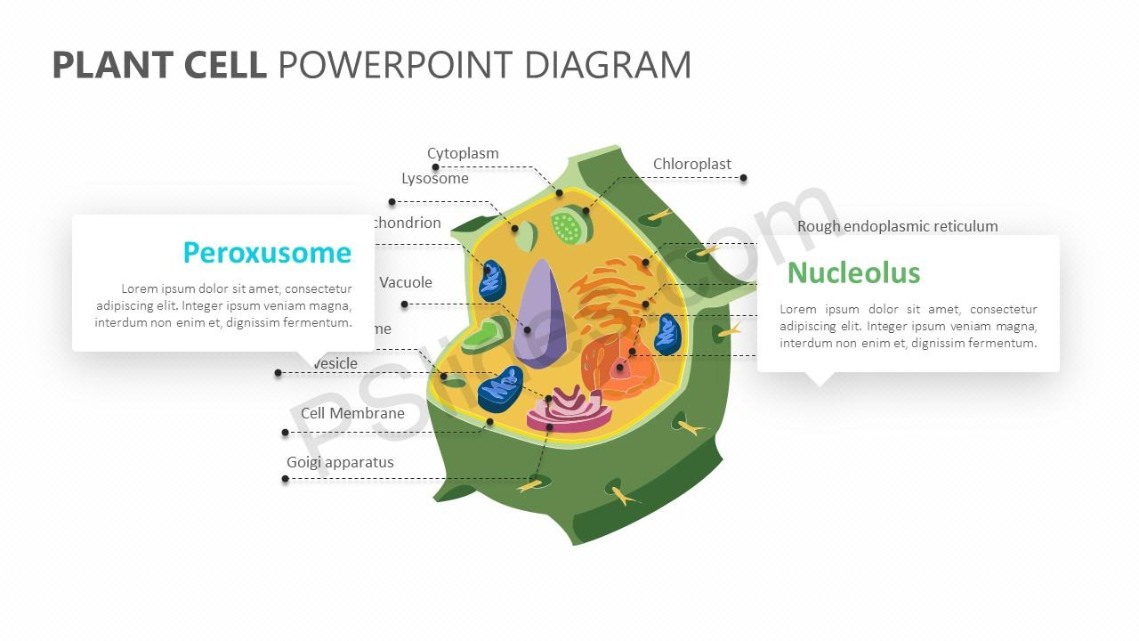 Plant Cell PowerPoint Diagram Slide 2