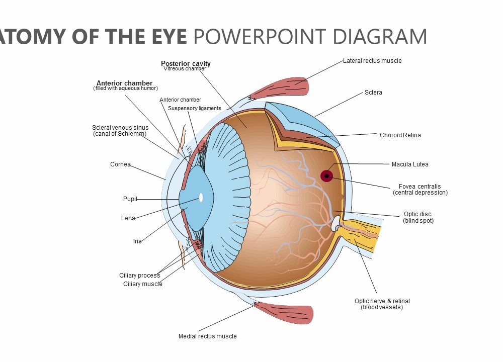 Anatomy Of The Eye Powerpoint Diagram Pslides