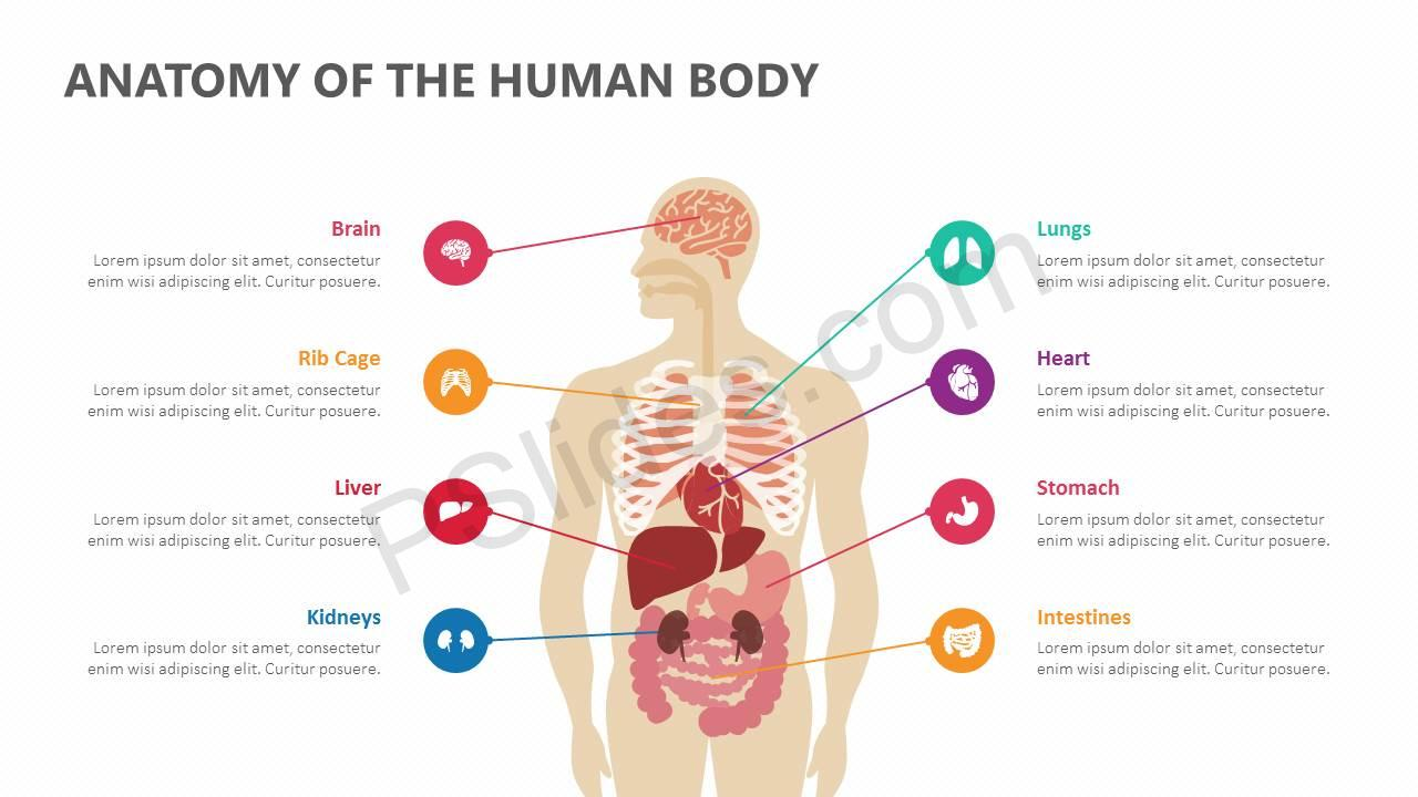 Anatomy-of-the-Human-Body-Slide1