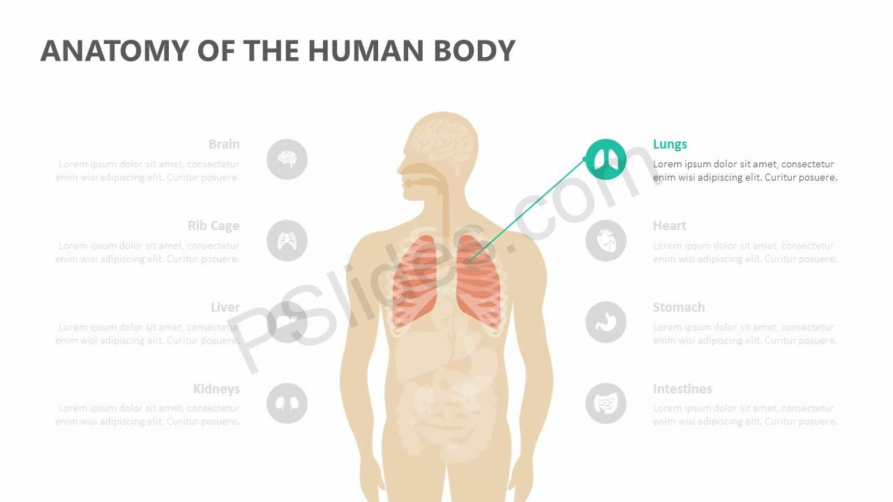 Anatomy-of-the-Human-Body-Slide2