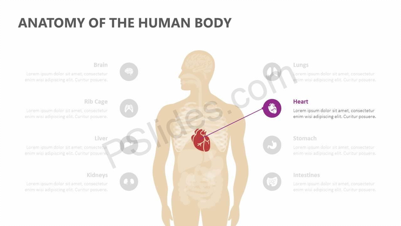 Anatomy-of-the-Human-Body-Slide3