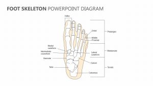 Foot Skeleton PowerPoint Diagram