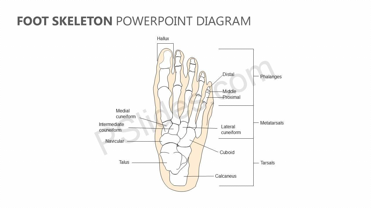 Foot-Skeleton-PowerPoint-Diagram