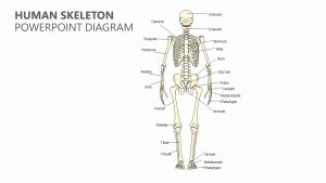 Human Skeleton PowerPoint Diagram