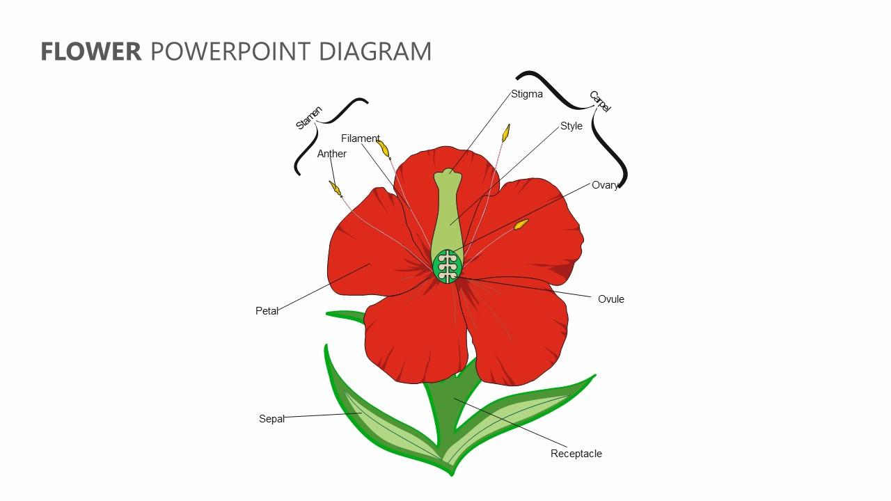 Flower PowerPoint Diagram
