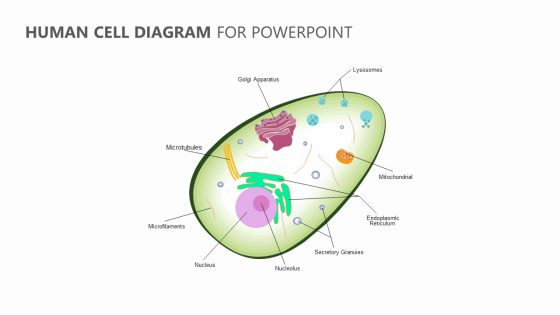 human cell diagram for powerpoint pslides Diagram of a Eye
