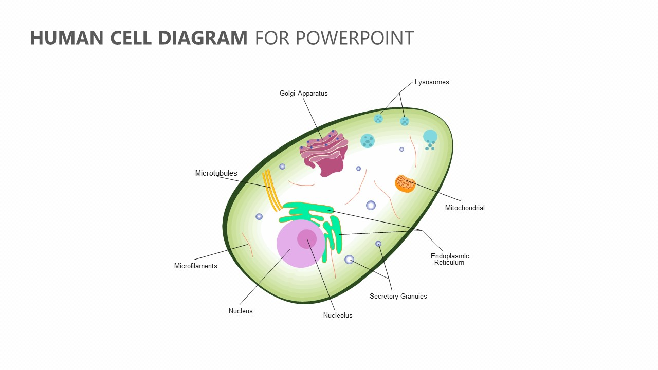 Human Cell Diagram for PowerPoint