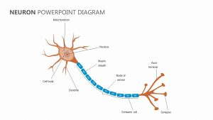 Neuron PowerPoint Diagram