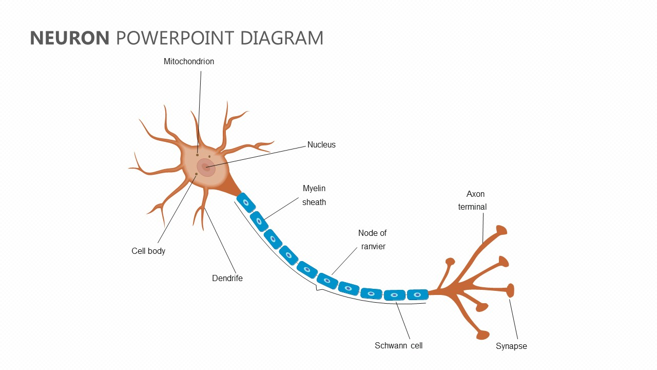 neuron-powerpoint-diagram jpg