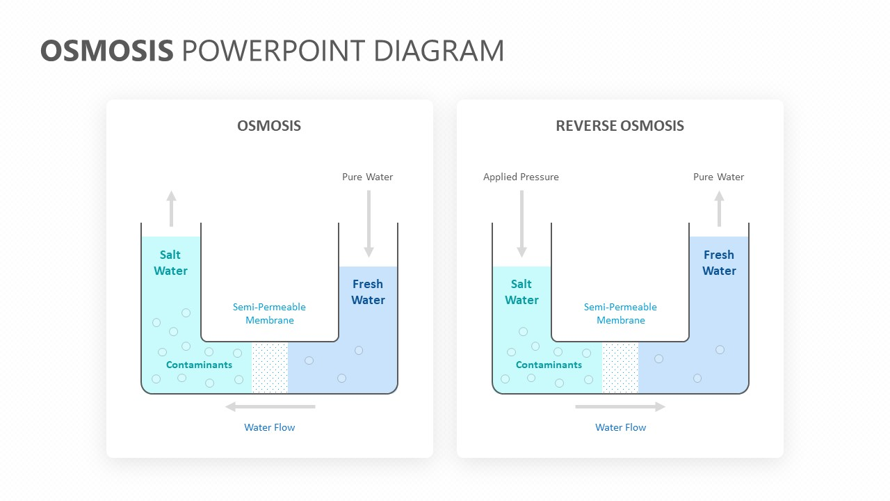 Osmosis PowerPoint Diagram (1)