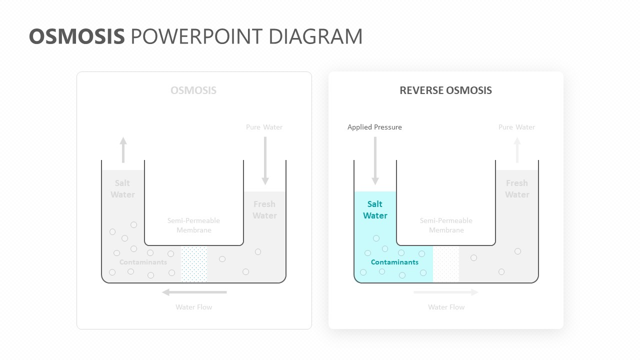 Osmosis PowerPoint Diagram (3)