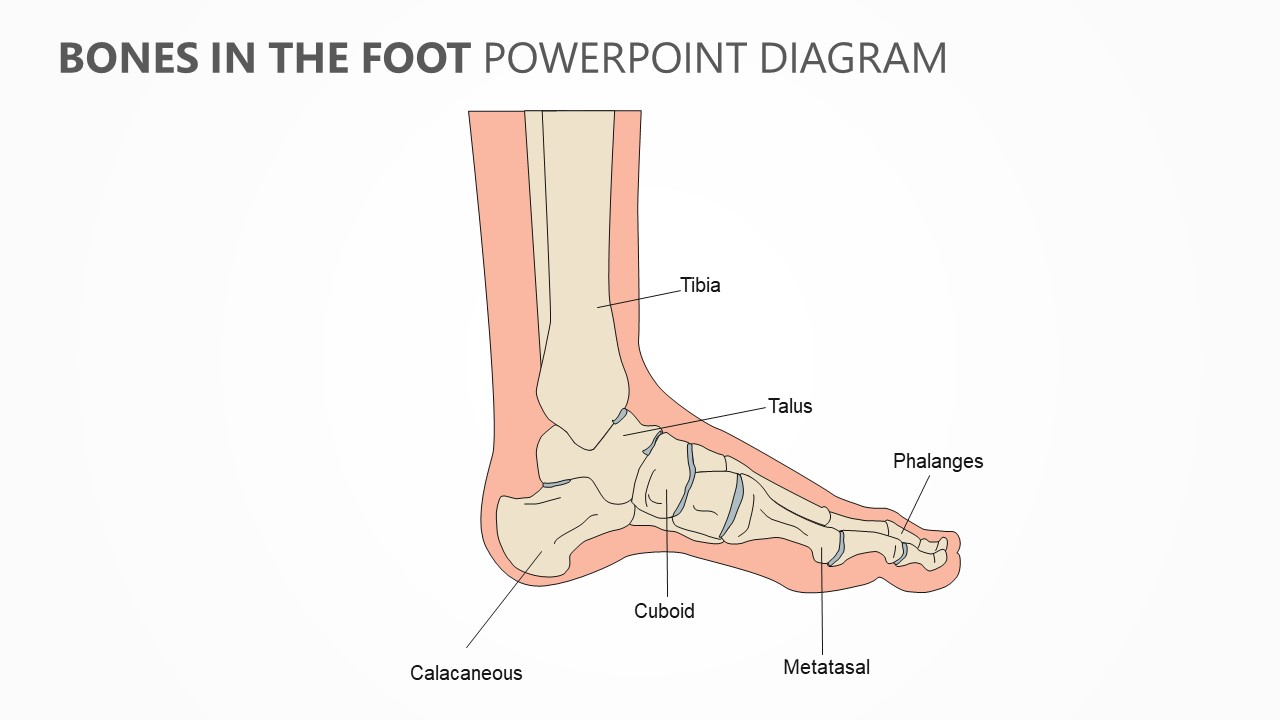 Bones in the Foot PowerPoint Diagram