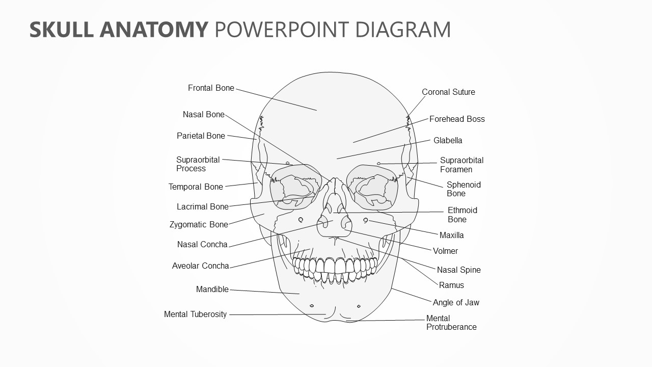 Skull Anatomy PowerPoint Diagram