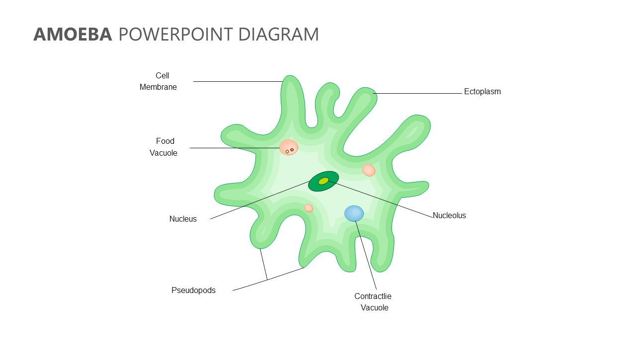 Amoeba PowerPoint Diagram