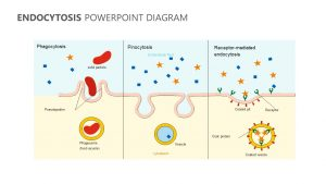 Endocytosis PowerPoint Diagram